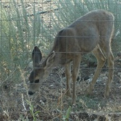 Baby Deer photo - Avadian
