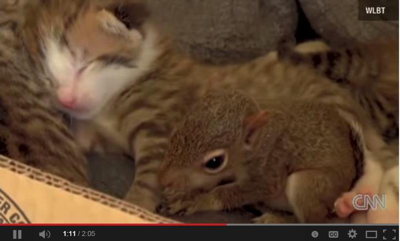 Mama Cat Adopts Baby Squirrel