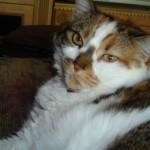 Fat-Cat-150x150.jpg