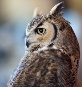 Squints Owl Photo by Jonathan Numer