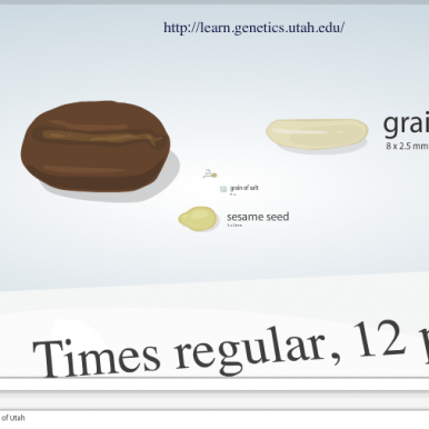Cell Size Graphic Univ of Utah