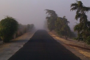 Photo by Brenda Avadian - Morning Fog in Paso Robles Wine Country
