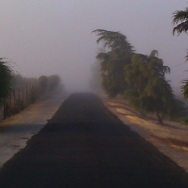 Photo by Brenda Avadian - Paso Robles Fog