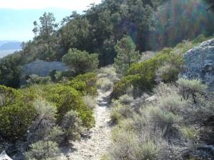 A path ventured Photo by Brenda Avadian