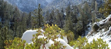 Winter Wonderland by Avadian Angeles National Forest