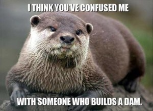 1 of 30 Cringeworthy Puns - Otter