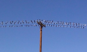 Support Group Birds on the Line by Brenda Avadian