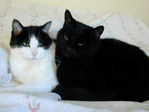Cuddling_Cats_DSCN0565_Photo by Avadian