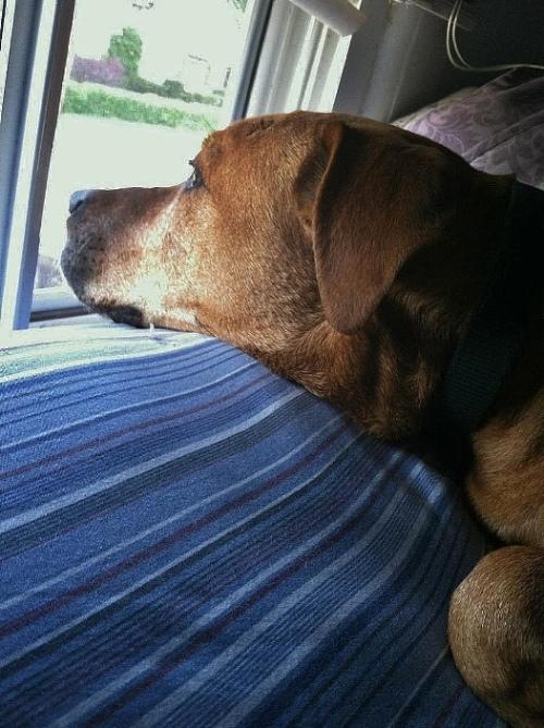 Juul_Four-legged-security_Daisy- on-the-lookout