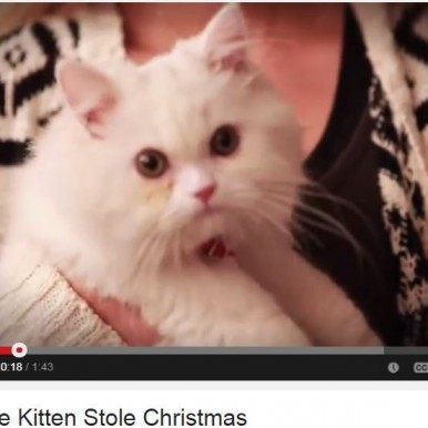 How The Kitten Stole Christmas -video