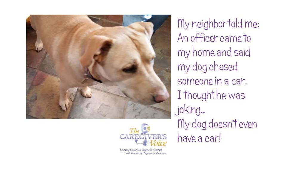 The Caregivers Voice Humor - Dog