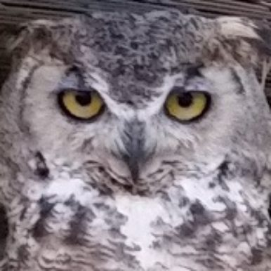OWLIE is the image for a person with dementia whose identity will remain confidential